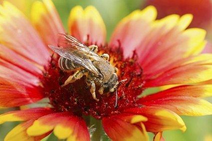 David's Garden Seeds Wildflower Pollinator Mix DSGPM01 (Multi) 500 Open Pollinated Seeds