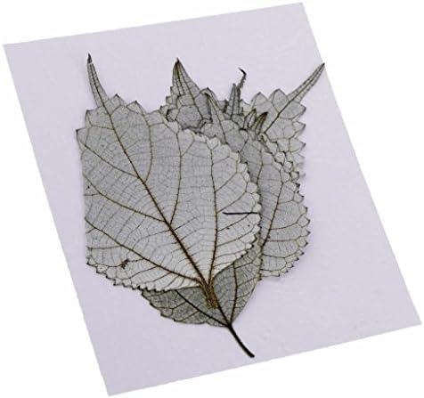 10枚 自然な ラミーリーフ 乾燥した 葉 押し葉 アート 工芸品 クラフト