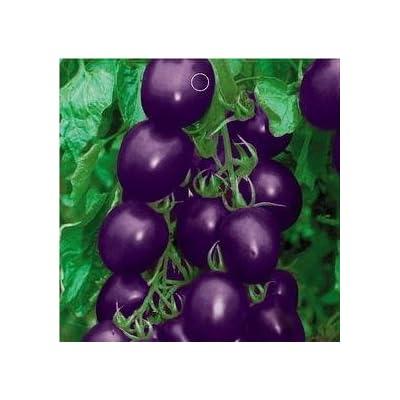 SD0133 Unique Rare Purple Cherry Tomato Vegetable Seeds, High Germination, 60-Days (20 Seeds) : Vegetable Plants : Garden & Outdoor