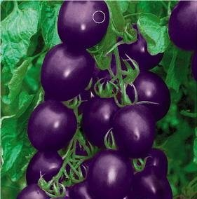 Purple Tomato (SD0133 Unique Rare Purple Cherry Tomato Vegetable Seeds, High Germination, 60-Days Money Back Guarantee (20 Seeds))