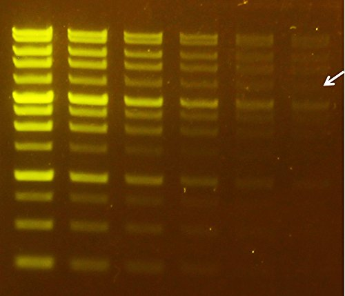 SMO Bio - FluoroVue Nucleic Acid Gel Stain (Pre-Stain) (10,000X Concentration) by SMO Bio (Image #2)