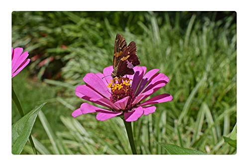 Tree26 Indoor Floor Rug/Mat (23.6 x 15.7 Inch) - Silver-Spotted Skipper On Zinnia Butterfly Insect ()