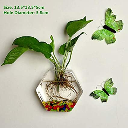 Image Unavailable  sc 1 st  Amazon.com & Amazon.com: BFY Wall Hanging Glass Vase Hydroponic Terrarium Fish ...