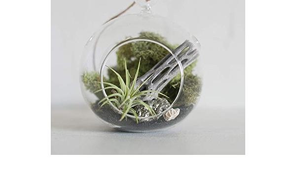 Minitu Pixie Glare Hanging Glass Terrarium Zen Garden Scene with Live Air Plant