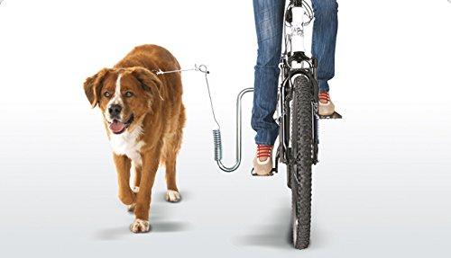 springer hund fahrrad