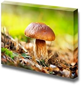 Cep Mushroom Boletus Growing in Autumn Forest Wall Decor