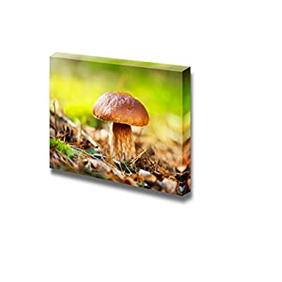 Elegant Expert Craftsmanship, Cep Mushroom Boletus Growing in Autumn Forest Wall Decor, it is good