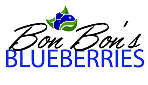 4 Blueberry Bush Plants - Choose from Several Different Varieties by Bon Bon's Blueberries (Image #2)