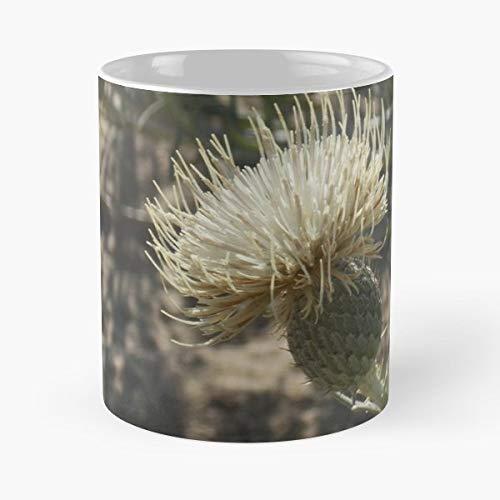 (Pitchers Thistle Threatened Species Sleeping Bear Dunes - Morning Coffee Mug Ceramic Novelty Holiday 11 Oz)
