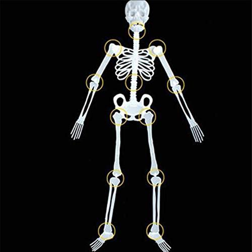 Halloween Skeleton - Luminous Human Skeleton Full Body Movable Joints Human Bones with Posable Joints Outdoor Party US Hanging Decoration Halloween Pose Skeleton Prop (150cm) -