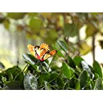 "Ginsco 25pcs Butterfly Stakes Outdoor Yard Planter Flower Pot Bed Garden Decor Butterflies Christmas Tree Decorations 5 Ships from US. 25pcs, Color sent in Random,some may be the same. Each approx. 10-1/4"" x 2-3/4"" x 2-1/4"" The wings can be pushed open or shut for varied display."