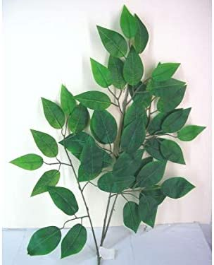 FLORSA Vara Rama Ficus Benjamin Verde