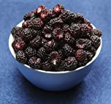 Northwest Wild Foods Fresh Frozen Organic Fruit