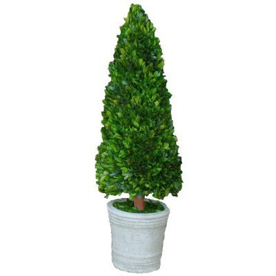 Mills Floral Boxwood Cone Topiary in Pot II