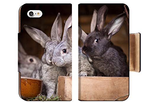 MSD Apple iPhone 8 Flip Pu Wallet Case Image ID: 11533654 Young Rabbits Popping Out of a Hutch European Rabbit Oryctolagus ()