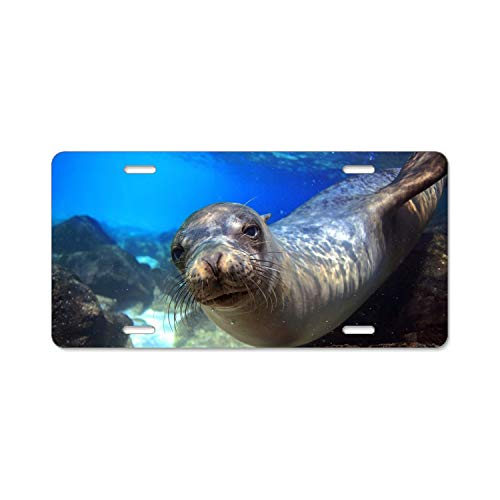 SFHU Engravers Chrome Personalized Laser Printed License Plate Frame Sea Lion Galapagos Island Ecuador Underwater Close-up Diving Tourism Bottom Blue Animal License Plate Covers