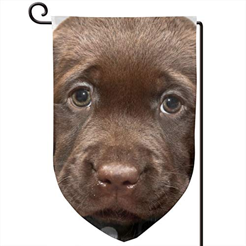 - ACHOGI Chesapeake Bay Retriever Puppy Garden Flag Outdoor Yard Decorative Flags Double Sided Priting for All Seasons & Holidays- 12.5 X 18 in