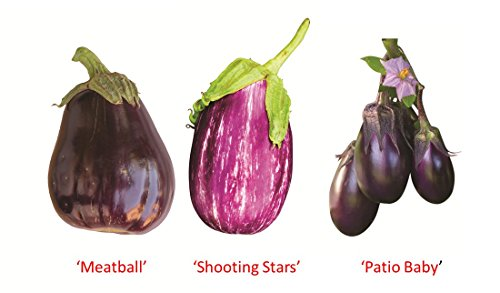 (Burpee Eggplant Collection, 1 each 'Meatball', 'Patio Baby', 'Shooting Stars', 3 Plants)
