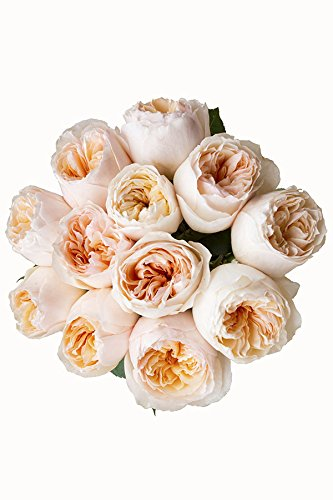 24 Stems - Fresh Cut Juliet Peach English Rose   David Austin (TM) from Flower Explosion