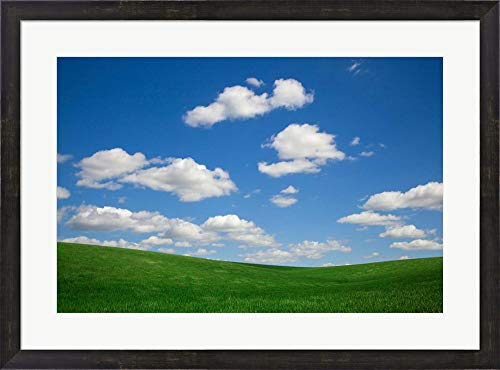(Green Wheat Field Landscape, Washington State by Jaynes Gallery/Danita Delimont Framed Art Print Wall Picture, Espresso Brown Frame, 31 x 23 inches)