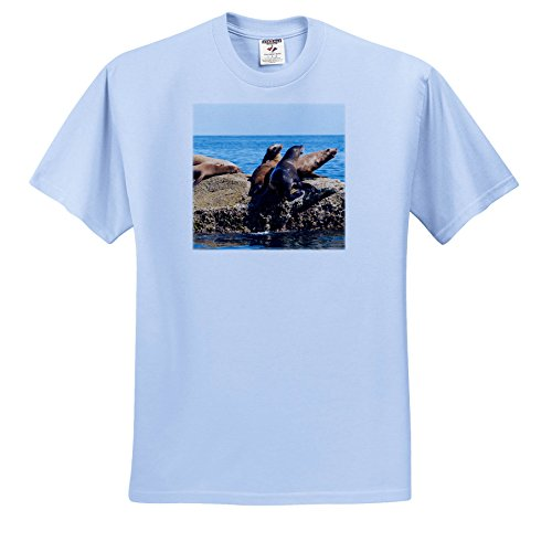 Coronado 12 Light (Danita Delimont - Seals - Mexico, Baja California Sur. Isla Coronado, California Sea Lion Colony - T-Shirts - Light Blue Infant Lap-Shoulder Tee (12M) (TS_258513_76))