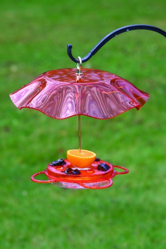 Translucent Oriole Bird Feeder