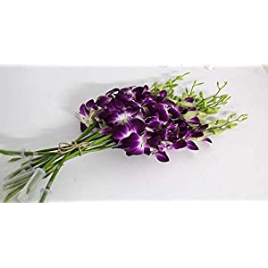 Athena's Garden Live Box Dendrobium Sonia/Galaxy/Bombay Cut Orchids, 7 Bunches, Vibrant Purple