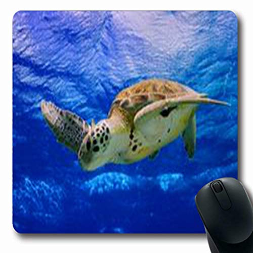 Pandarllin Mousepads Diving Green Sea Turtle Swimming Unterwasser Ocean Caribbean Wildlife Nature Oblong Shape 7.9 x 9.5 Inches Oblong Gaming Mouse Pad Non-Slip Rubber Mat (Best Snorkeling In Bonaire)