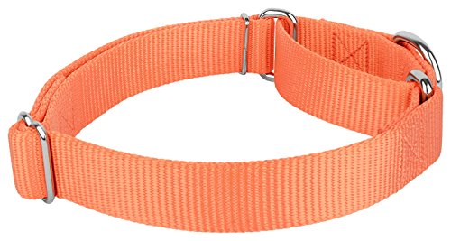 Pictures of Country Brook Design | Martingale Heavyduty Nylon Dog 4