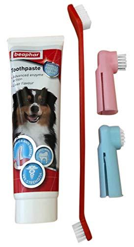 Tarot Health Cepillo de Dientes y Pasta de Dientes con 3 cepillos de Dientes para Perros, también Apto para Gatos: Amazon.es: Productos para mascotas
