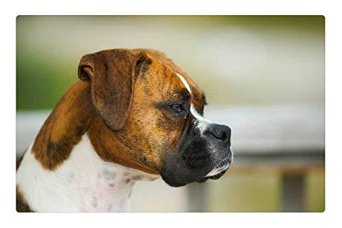 Tree26 Indoor Floor Rug/Mat (23.6 x 15.7 Inch) - Boxer Dog Animal Pet Closeup Macro Profile