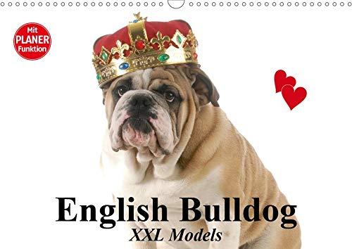 (English Bulldog XXL Models (Wandkalender 2020 DIN A3 quer): Starke Bulldoggen Models in