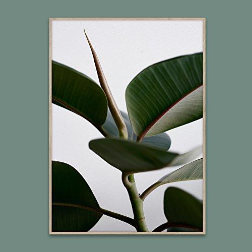 PAPER COLLECTIVE GREEN HOME 02 ポスター 50cm×70cm/ペーパーコレクティブ グリーンホーム 02 B075FQKKF3