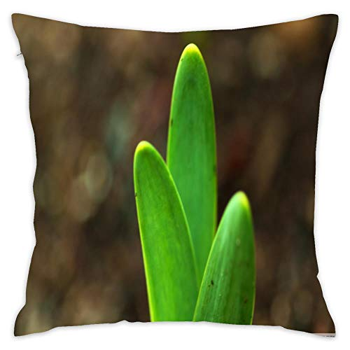 Throw Pillow Case Custom 100% Cotton Early Spring Daffodil Sprout Party Novelty Decorative Bed Protector Square Cushion Case for Home Sofa Decor Chair Office 45x45cm/18x18 in