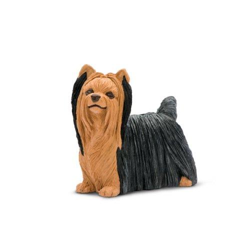 - Safari Best in Show: Yorkshire Terrier