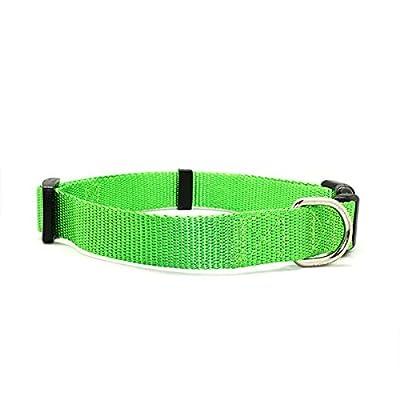 collier pour chien 25 cm