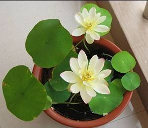 The 8 best water plants indoor