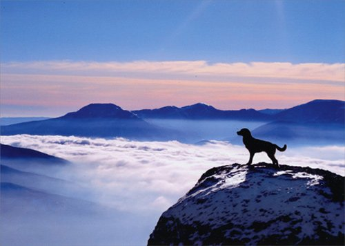 Dog On Mountain - Avanti Pet Sympathy Card