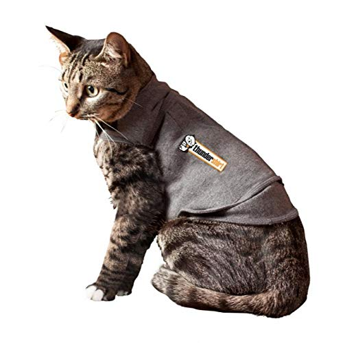 Top 10 Best Shirts for Cats