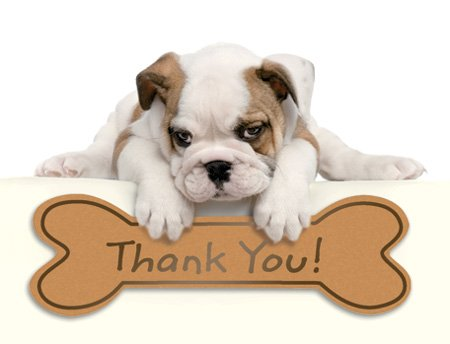 Design Design Bulldog Puppy Thank You Note Cards 20 Count 119-04031 by Design Design