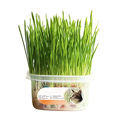 (Hankyky Pet Snacks Treatment Cat Grass Seeds Grow Kit Organic Eco Catnip Seed Special Cat Healthy Treats and Toys-Cat Grass, Catnip, Crystal Mud Balls Toys)