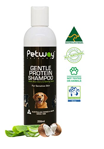 PETWAY Petcare Gentle Protein Shampoo with Aloe Vera and Baking Soda – Natural Pet Shampoo, Coconut Fragrance, Gluten and Soap Free, Removes Dandruff, Deodoriser, pH Balanced, Biodegradable - 250ml