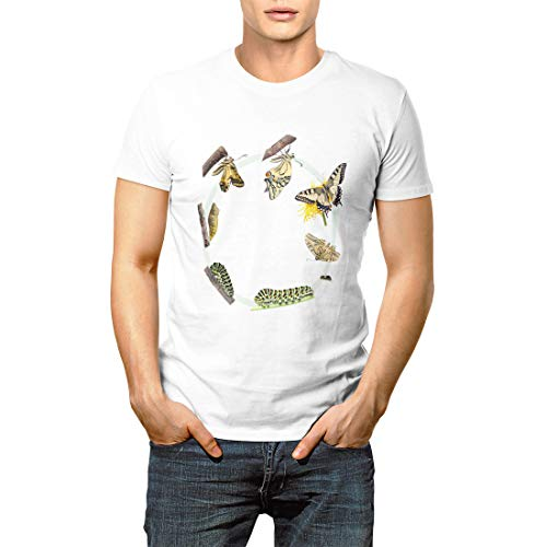 Swallowtail Life Cycle - Green Caterpillar Life Cycle of The Swallowtail Butterfly Men's Short Sleeve T-Shirt