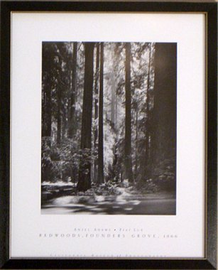 Framed Redwoods Fiat Lux Founders Grove Ansel (Redwoods Founders Grove Framed Art)