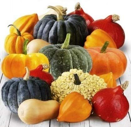 Pumpkin Simeon Mix Organic Seeds 7 Best Sweet Varieties up to 100 Seeds