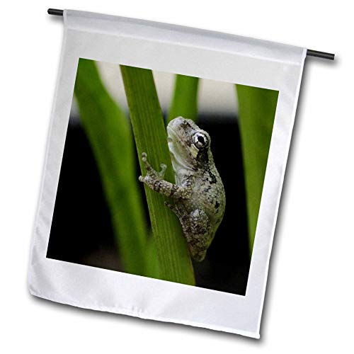 3dRose Stamp City - Animals - Photograph of a Tiny Gray treefrog clinging on to a Calla Lily Leaf. - 12 x 18 inch Garden Flag ()