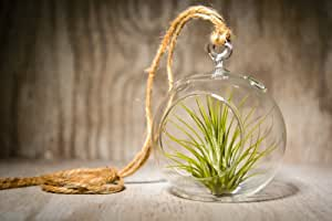 Hinterland Trading Hanging Glass Globe Terrarium with Air Plant Sweet Little House Plant for Home or Office