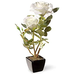 National Tree 12.5 Inch White Rose Flowers with Black Square Ceramic Base (NF36-5144S-1) 25