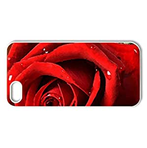 Red rose - Case Cover for iPhone 5 and 5S (Flowers Series, Watercolor style, White)