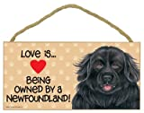 Newfoundland (Love is being owned by) Door Sign 5''x10''